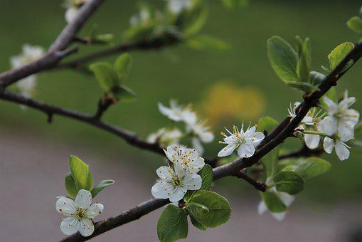 Fruit, Flowers, Flowering, Picnic, Spring, Green