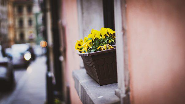 Flower, Flowers, Pot, Plant, Window, Green, Yellow