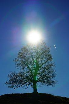 Solitary Tree, Tree, Sun, Backlighting