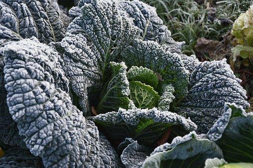 Kohl, Garden, Vegetables, Healthy, Food