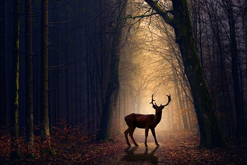 Venison, Forest, Evening, Animals, Nature, Red Deer