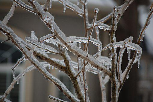 Branches, Ice, Winter, Cold, Tree, Weather, Frozen, Icy