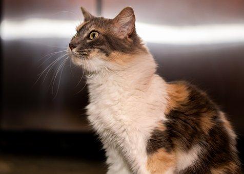 Cat, Animal, Cute, Feline, Grass, Nature, Amazing, Pet