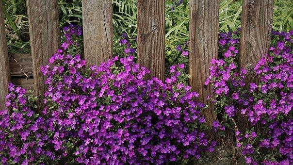Plants Pillow, May, Aubrietien, Garden, Close Up, Flora
