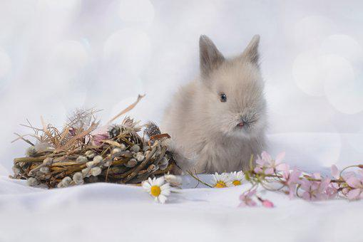 Zerghase, Hare, Animal, Easter, Cute, Nature, Pet