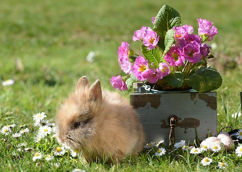 Rabbit, Easter, Hare, Easter Bunny, Cute, Spring