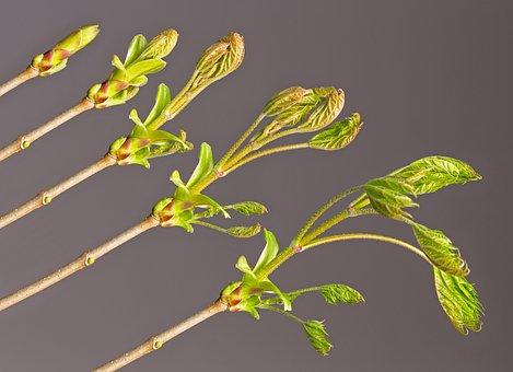 Bud, Leaf, Development, Go Up, Branch, Sprout, Engine