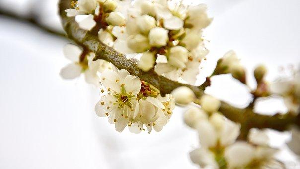 Spring, Flower, Nature, Plant, Flora, Branch, Bud, Tree