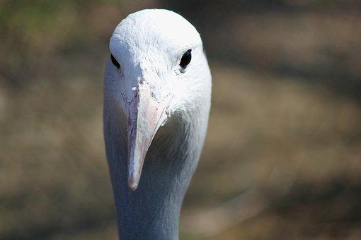 Bird, Crane, Tomato, Head, Beak, Eyes, White