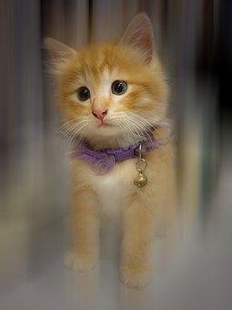 Kitten, Cat, Pet, Animal, Cute, Feline, Eyes, Kitty