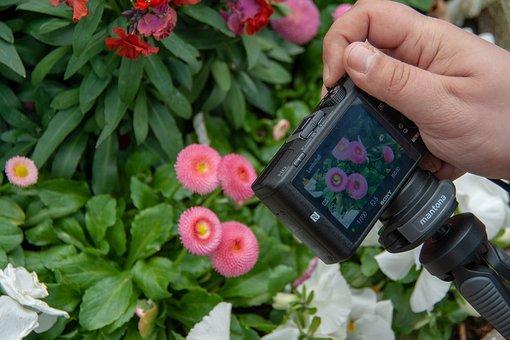 Focus, Details, Flowers, Natur, Kamera