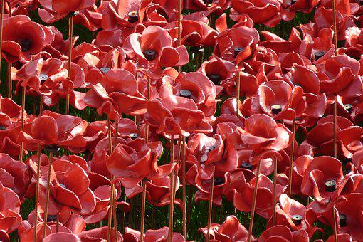 Remembrance, Centenary, Poppies, Commemoration, Symbol