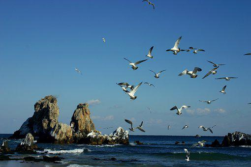 Sea, Rock, Geese, Nature, Coastal, Landscape, Scenery