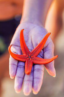 Star, Starfish, Sea, Ocean, Nature, Animal, Water