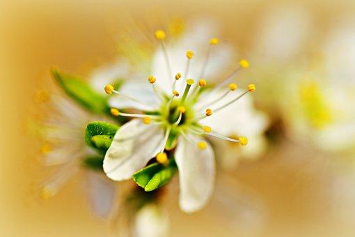 Apple Blossom, Flower, Branch, Fruit, Orchard, Garden