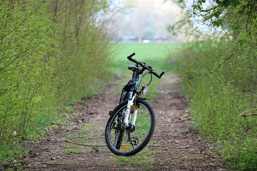 Bike, Forest Path, Nature, Spring, Bike Ride