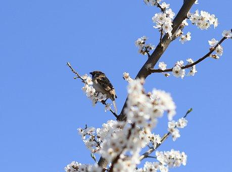 Sparrow, Casey, Flowers, Spring, Birds, Rest