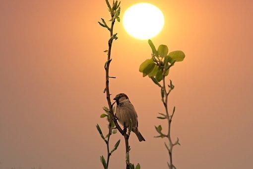Sparrow, Casey, Sunrise, Birds, Rest