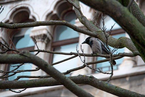 Crow, Bird, Buda Castle, Black, Wingtip Toys, Feather