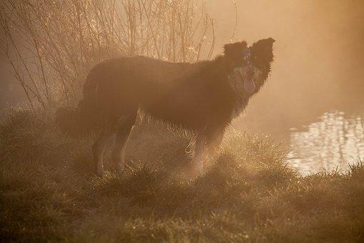Dog, Mist, Collie, Wet, Dawn, Landscape, Autumn, Winter