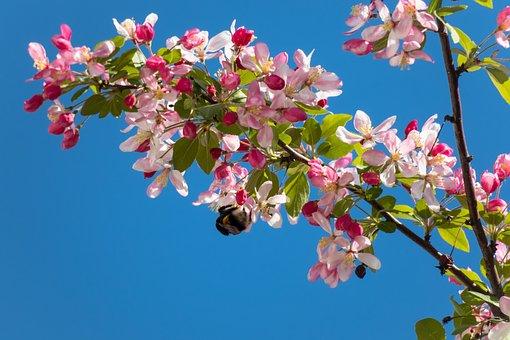 Embellishment, Blossom, Bloom, Hummel, Bloom