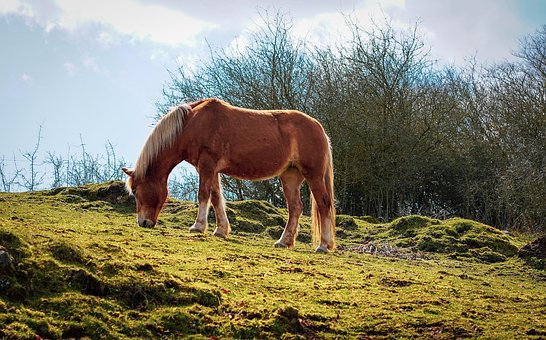 Horse, Brown Horse, Stallion, Pasture, Graze, Meadow