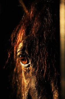 Horse, Eye, Mane, Portrait, Vraník, Black, Head, Detail