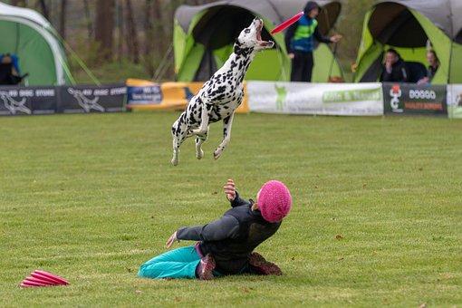 Frisbee, Dogfrisbee, Dog, Disc Mastiffs, Hundesport