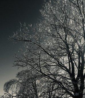 Tree, Winter, Night, Rising, Ice, Branches, Black, Grey