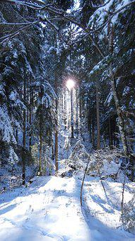Winter, Cold, Snow, Frost, Ice, Wintry, Landscape, Sun