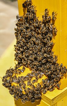 Bees, Nature, Animals, Insect, Honey Bee, Spring, Honey