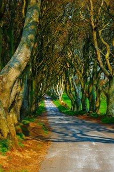 Trees, Dark Hedges, Ireland, Road, Mysterious, Pathway