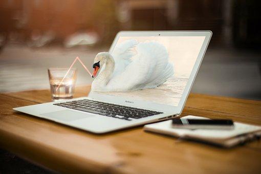 Swan, Laptop, Mac, Water, Straw, Swan Drinking Water
