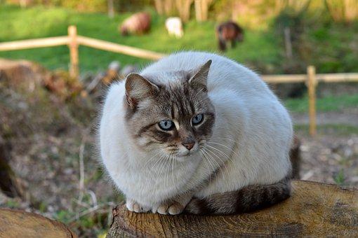 Cat, Feline, Animal, Mammal, Female, Nature, Companion