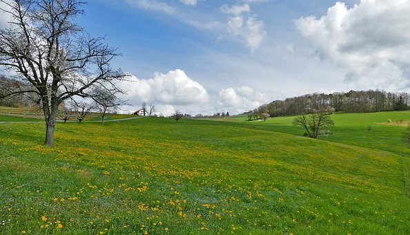 Landscape, Spring, Nature, Meadow, Trees, Flowers