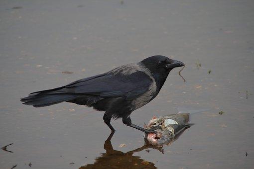 Bird, Animel, Photo, Wildlife, Nature, Animal, Wild