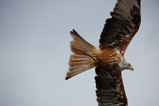 Bird, Raptor, Nature, Bird Of Prey, Wing, Close Up
