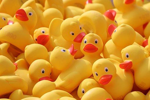 Duck Meet, Ducks, Rubber Ducks, Plastic Ducks