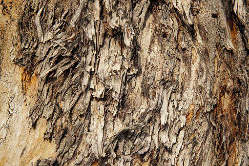 Texture, Tree, Wood, Nature, Trunk, Cracked, Pattern