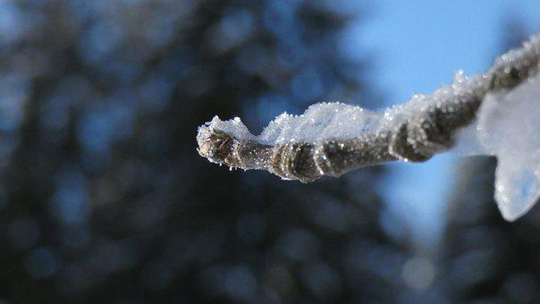 Macro, Winter, Ice, Branch, Tree, Frost, Close Up