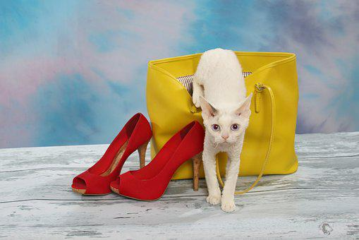Cat Crawling Out Of Purse, Cat, Yellow Purse, Red Shoes