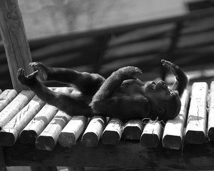 Baby Gorilla Lying Down, Black And White, Zoo, Animal