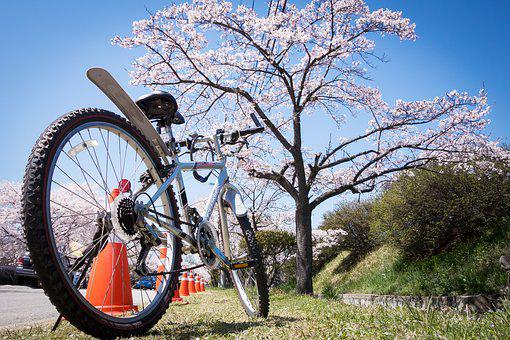 Cherry Blossom, Bicycle, Bike, Spring, Blossom, Pink