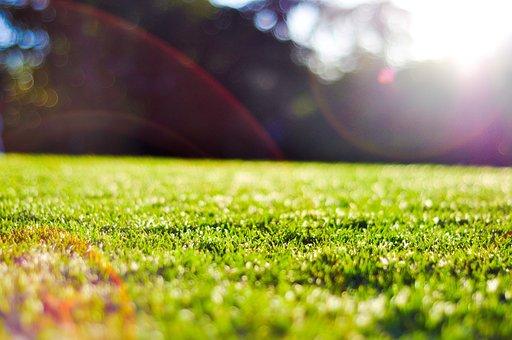 Brisbane, Queensland, Bright, Garden, Grass, Flare