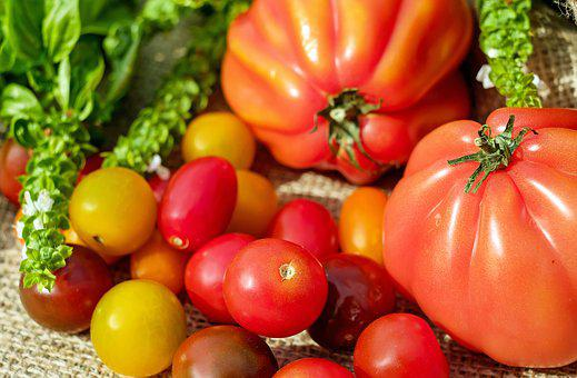 Tomatoes, Colorful, Vitamins, Frisch, Harvest, Summer