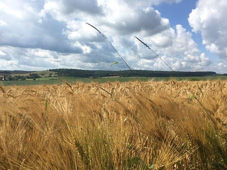Cereals, Sky, Field, Grain, Wheat, Clouds, Landscape