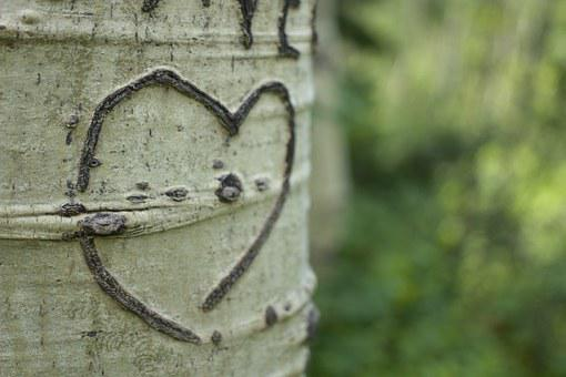 Heart, Aspen, Tree, Bark, Carving, Colorado, Steamboat