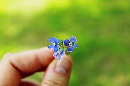 Forget Me Not, Flower, Blue, Finger, Nature