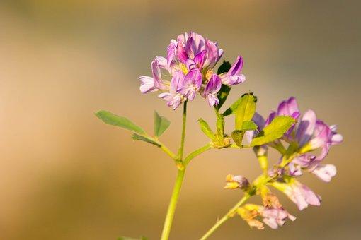 Blossom, Bloom, Purple, Pink, Purple Flower, Nature