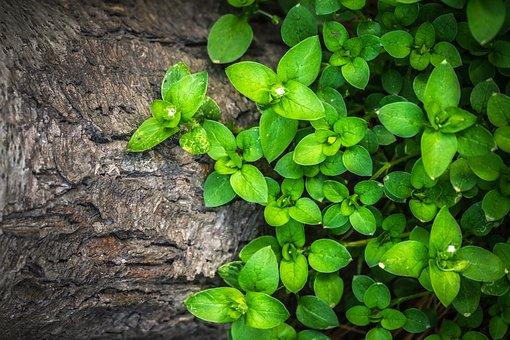 Plants, Hwalyeob, Leaf, Nature, Wood, Green, Texture